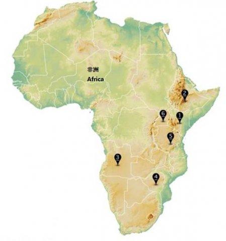 非洲卡车重量限制 木材运输成本上涨